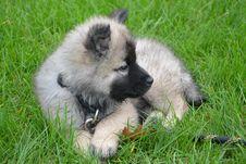 Free Dog, Dog Like Mammal, German Spitz, Dog Breed Royalty Free Stock Photography - 109022667