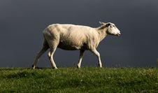 Free Grassland, Horn, Grazing, Pasture Stock Photos - 109022703