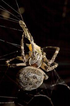 Free Arachnid, Spider, Spider Web, Invertebrate Stock Photo - 109022810