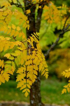 Free Yellow, Leaf, Autumn, Tree Royalty Free Stock Photos - 109023018