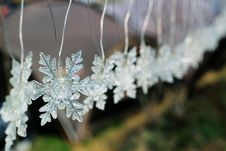 Free Frost, Flower, Plant, Macro Photography Stock Photos - 109023103