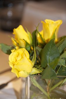 Free Flower, Yellow, Rose Family, Rose Stock Image - 109023111