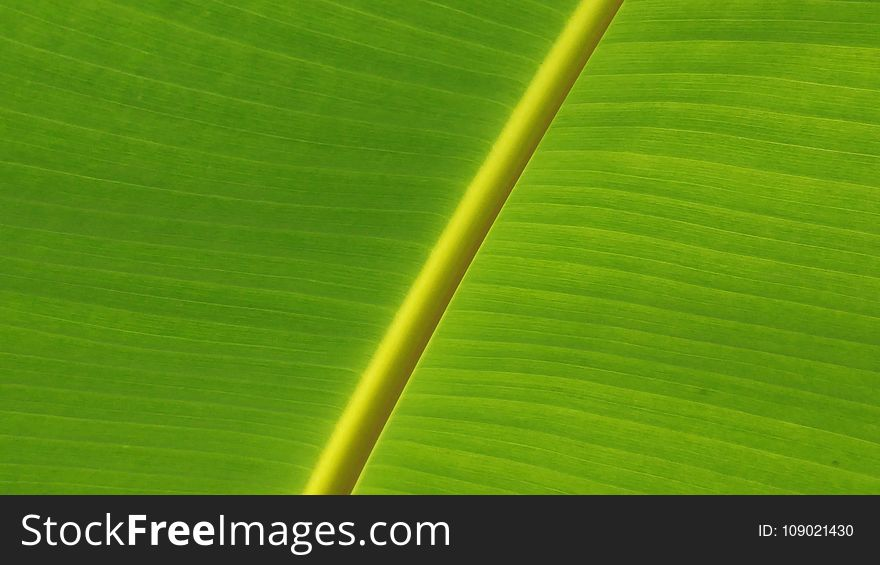 Leaf, Green, Banana Leaf, Plant