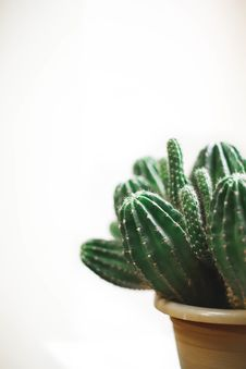 Free Closeup Photo Of Cactus Plant In A Pot Royalty Free Stock Images - 109219879