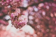 Free Selective Focus Photography Of Pink And White Petaled Flowers Stock Images - 109219914