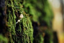 Free Vegetation, Flora, Grass, Moss Royalty Free Stock Images - 109329789