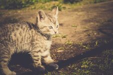 Free Tabby Kitten Play Outside Retro Royalty Free Stock Images - 109344439