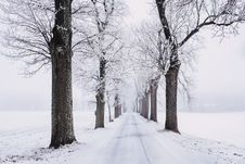 Free Snowy Pathway Surrounded By Bare Tree Royalty Free Stock Images - 109361819
