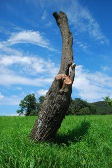 Free Tree Stump Stock Photo - 10944290