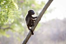 Free Closeup Photo Of Brown Baby Monkey Stock Photo - 109434140