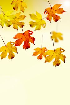 Free Colorful Autumn Leaves Stock Photography - 10950452