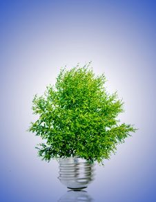 Free Tree In Light Bulb Royalty Free Stock Image - 10950466