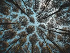 Free Low Angle Photography Of Brown Leaf Forest Trees At Daytime Royalty Free Stock Images - 109516339