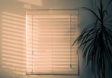 Free Photo Of Window Blinds Near Plant Stock Photography - 109516342