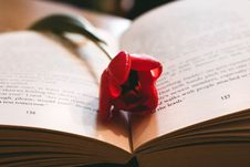 Free Red Petaled Flower Between The Book Page Royalty Free Stock Photos - 109516378