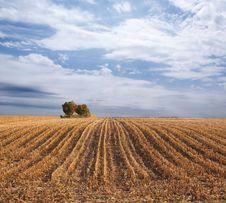Free Sky Over Fields Royalty Free Stock Image - 10966506