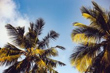 Free Clear Blue Sky Over Two Coconut Trees Royalty Free Stock Photo - 109708425