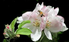 Free Flower, Blossom, Insect, Flora Royalty Free Stock Image - 109829906