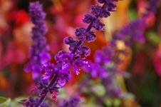 Free Purple, Violet, Flower, Lilac Stock Images - 109830154