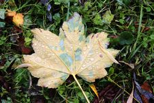 Free Leaf, Plant, Autumn, Grass Stock Photos - 109830193