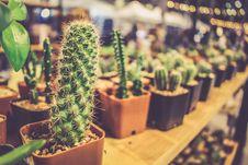 Free Plant, Cactus, Hedgehog Cactus, Flowerpot Stock Images - 109830274