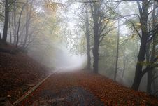 Free Woodland, Nature, Forest, Fog Stock Photography - 109830302