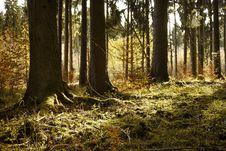 Free Woodland, Forest, Ecosystem, Tree Royalty Free Stock Image - 109830306
