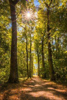 Free Nature, Woodland, Forest, Ecosystem Stock Photos - 109830443