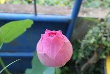 Free Flower, Plant, Leaf, Bud Royalty Free Stock Images - 109833899