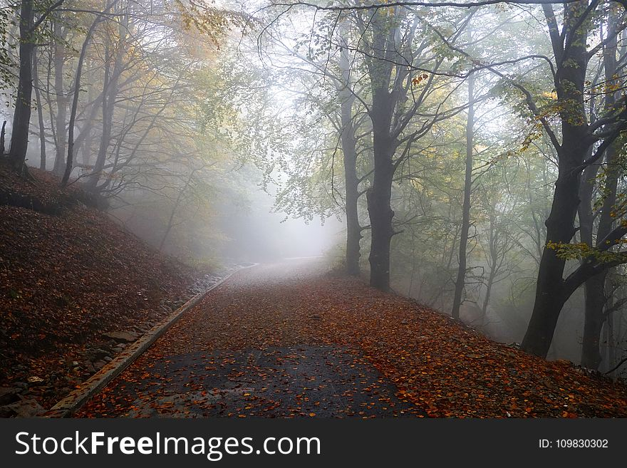Woodland, Nature, Forest, Fog