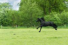 Free Animal, Black, Countryside Royalty Free Stock Image - 109883636