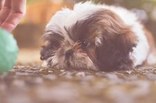 Free Animal, Blur, Canine Royalty Free Stock Images - 109883689
