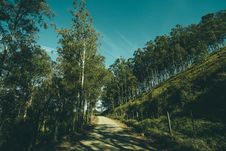 Free Grey Pathway In Middle On Green Trees And Grass Fields During Daytime Stock Photo - 109883700