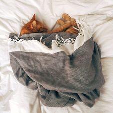 Free Orange Tabby Cat Sleeping On White Textile Royalty Free Stock Photos - 109883718