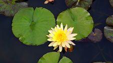 Free Aquatic, Plant, Bloom Stock Image - 109883851