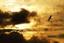 Free Backlit, Bird, Clouds Royalty Free Stock Images - 109884069
