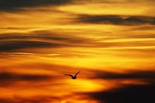 Free Backlit, Bird, Clouds Stock Photography - 109884152