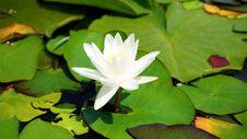 Free Aquatic, Plant, Beautiful Stock Image - 109884171