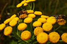 Free Animal, Bees, Bloom Royalty Free Stock Photos - 109884238