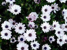 Free Bloom, Blossom, Doi Stock Image - 109884241