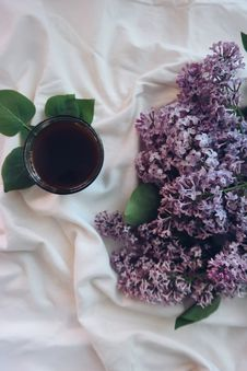 Free Blanket, Bouquet, Close-up Royalty Free Stock Photo - 109884345