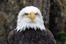 Free Animal, Avian, Bald Stock Images - 109884484