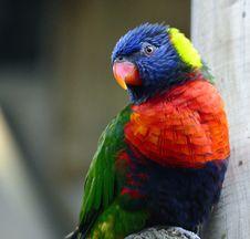 Free Animal, Avian, Beak Royalty Free Stock Photos - 109884498