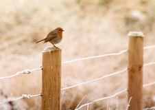 Free Animal, Avian, Beak Royalty Free Stock Photography - 109884507