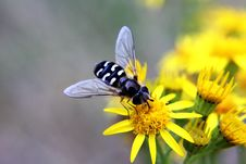 Free Animal, Bloom, Blossom Royalty Free Stock Photos - 109884518