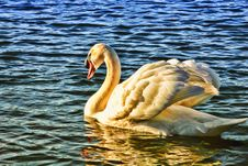 Free Animal, Avian, Beak Stock Images - 109884524
