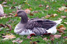 Free Animal, Avian, Beak Royalty Free Stock Images - 109884529