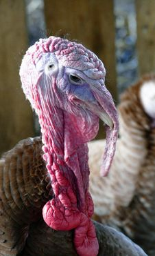 Free Animal, Avian, Beak Stock Photos - 109884703
