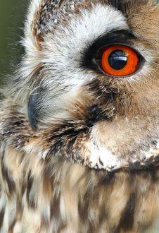 Free Animal, Avian, Beak Royalty Free Stock Photos - 109884708