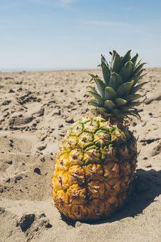 Free Arid, Beach, Beachlife Royalty Free Stock Photography - 109884897
